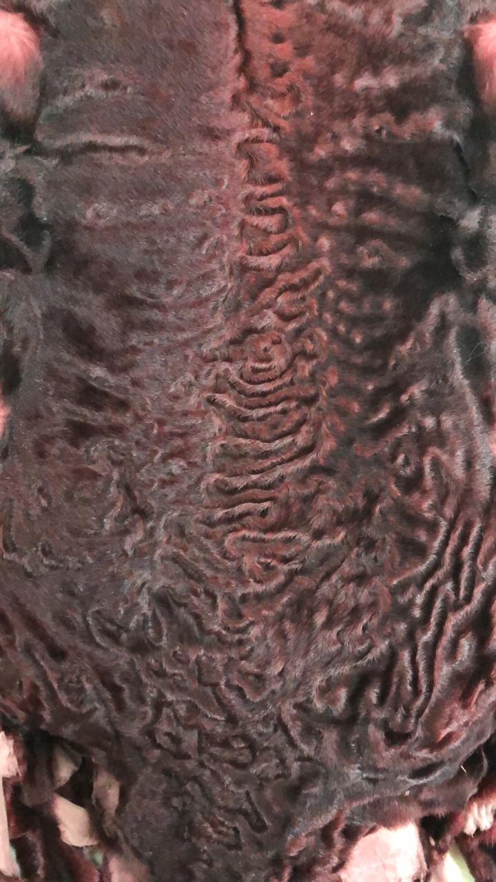 Шкурки каракуля бордовые