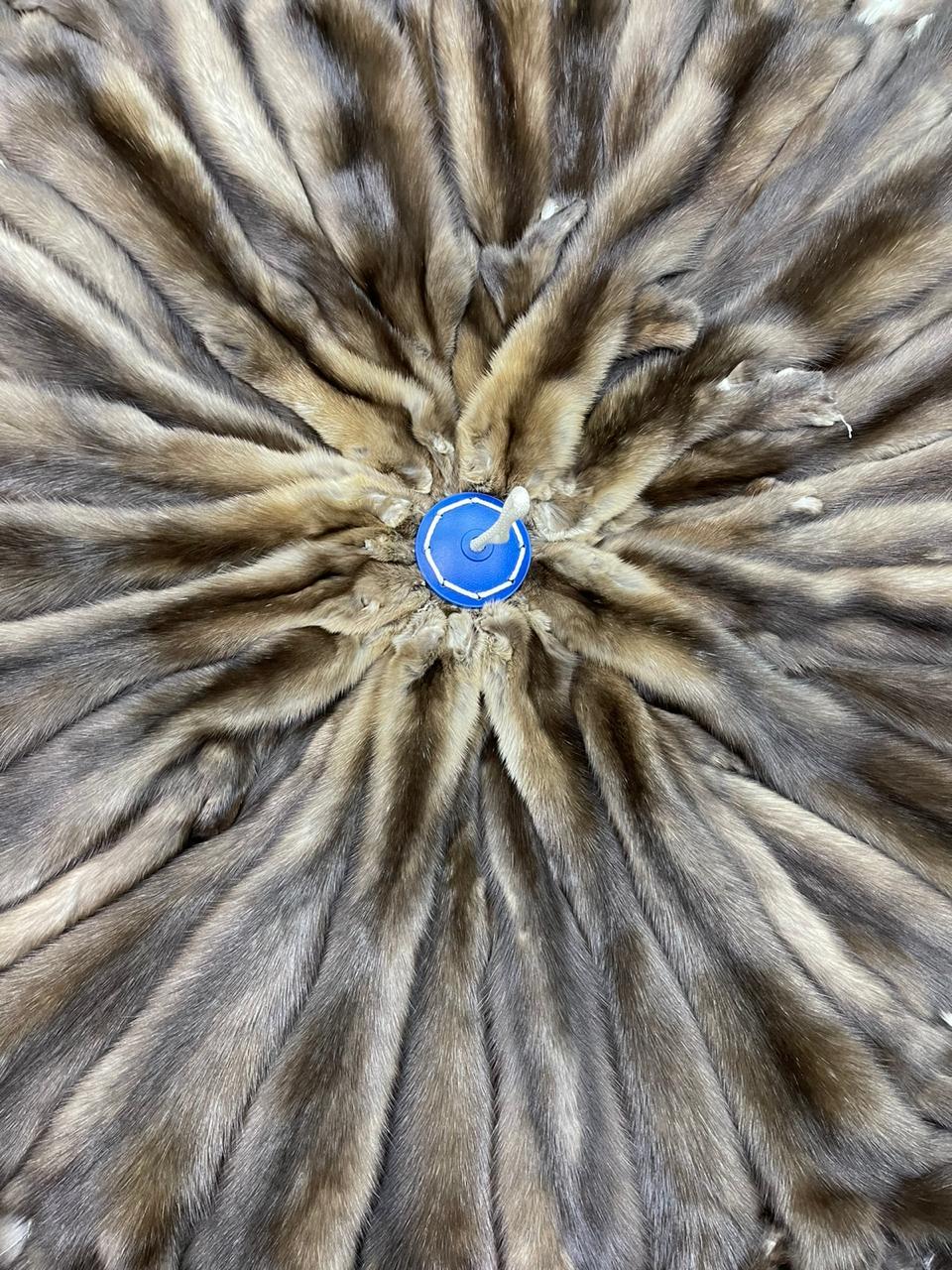 Камчатский соболь
